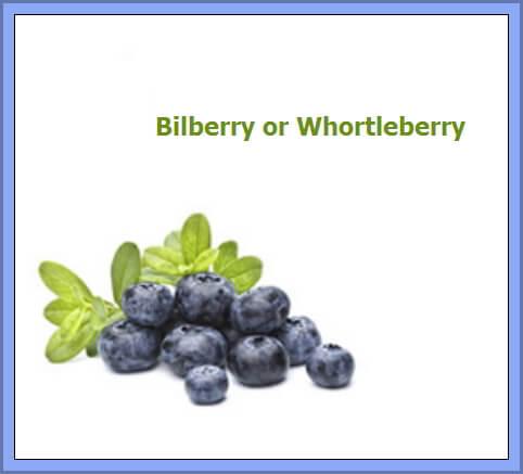 Bilberry -Whortleberry